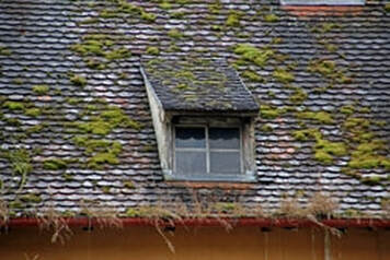 Photos shows a roof and gutter that is extremely clogged and full of moss and overgrowth
